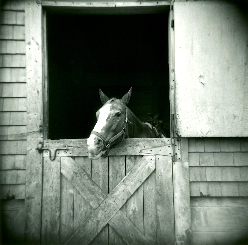 Horse-with-Barn-Door-copy---Version-2